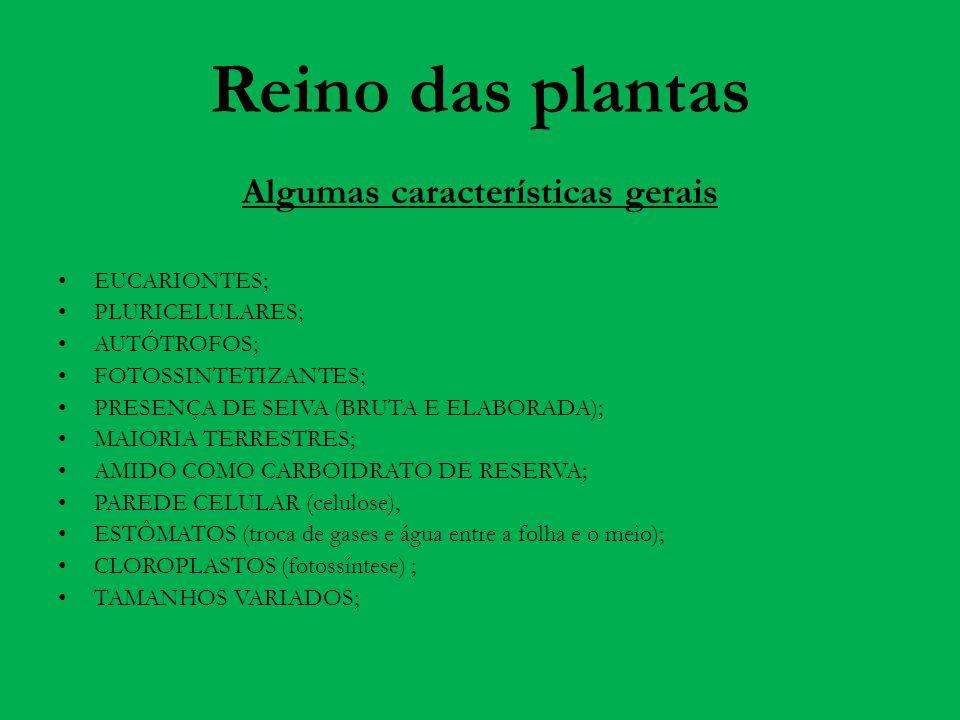 Reino das plantas Algumas características gerais EUCARIONTES; PLURICELULARES; AUTÓTROFOS; FOTOSSINTETIZANTES; PRESENÇA DE SEIVA (BRUTA E ELABORADA); M
