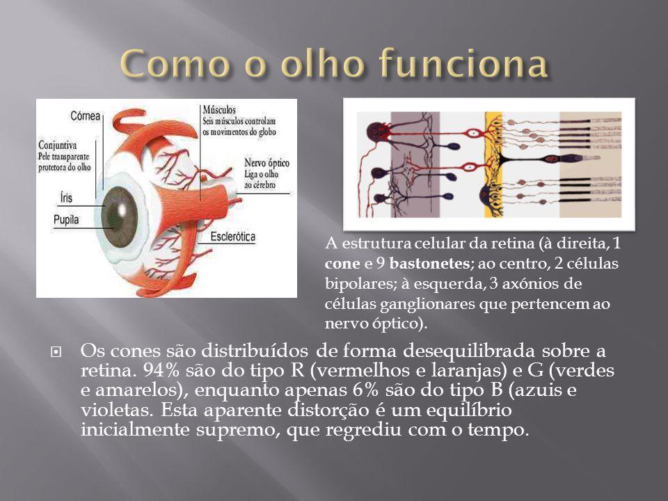 Os cones são distribuídos de forma desequilibrada sobre a retina.