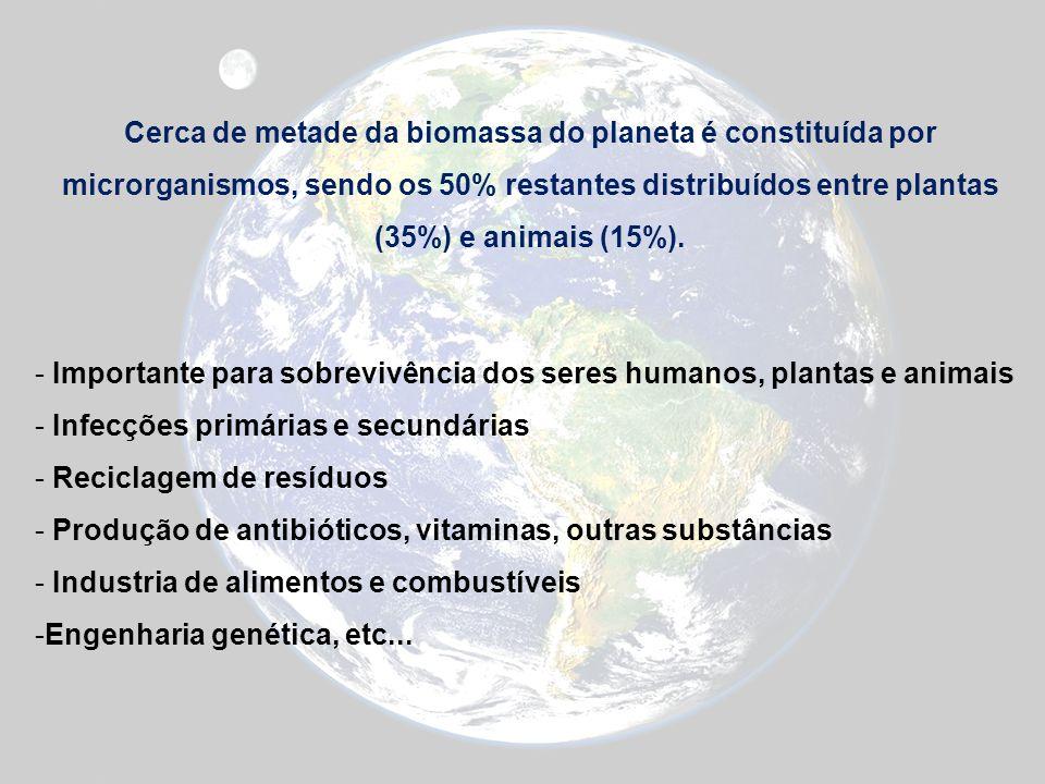 Cerca de metade da biomassa do planeta é constituída por microrganismos, sendo os 50% restantes distribuídos entre plantas (35%) e animais (15%). - Im