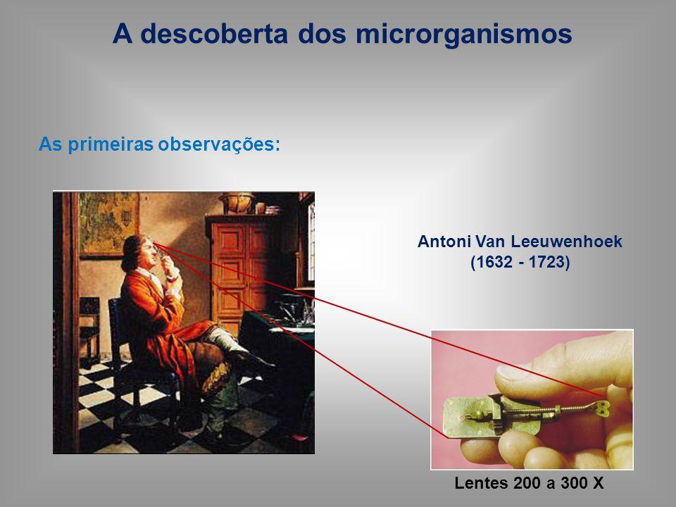 Leeuwenhoek - Fundador da microbiologia Observações relatadas a Sociedade Real de Londres Observou e descreveu os microrganismos ( animáliculos) O MUNDO INVISÍVEL