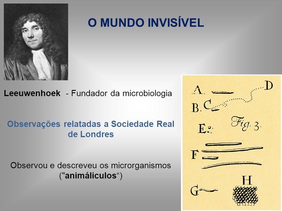 Leeuwenhoek - Fundador da microbiologia Observações relatadas a Sociedade Real de Londres Observou e descreveu os microrganismos (