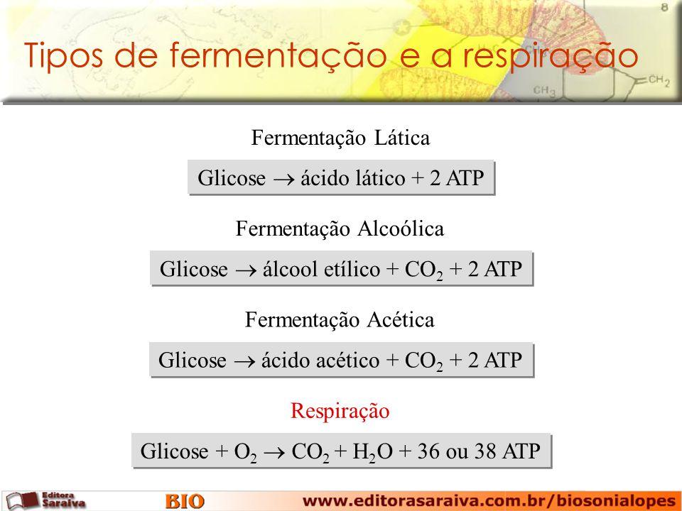 Tipos de fermentação e a respiração Glicose ácido lático + 2 ATP Fermentação Lática Glicose álcool etílico + CO 2 + 2 ATP Fermentação Alcoólica Glicose ácido acético + CO 2 + 2 ATP Fermentação Acética Glicose + O 2 CO 2 + H 2 O + 36 ou 38 ATP Respiração