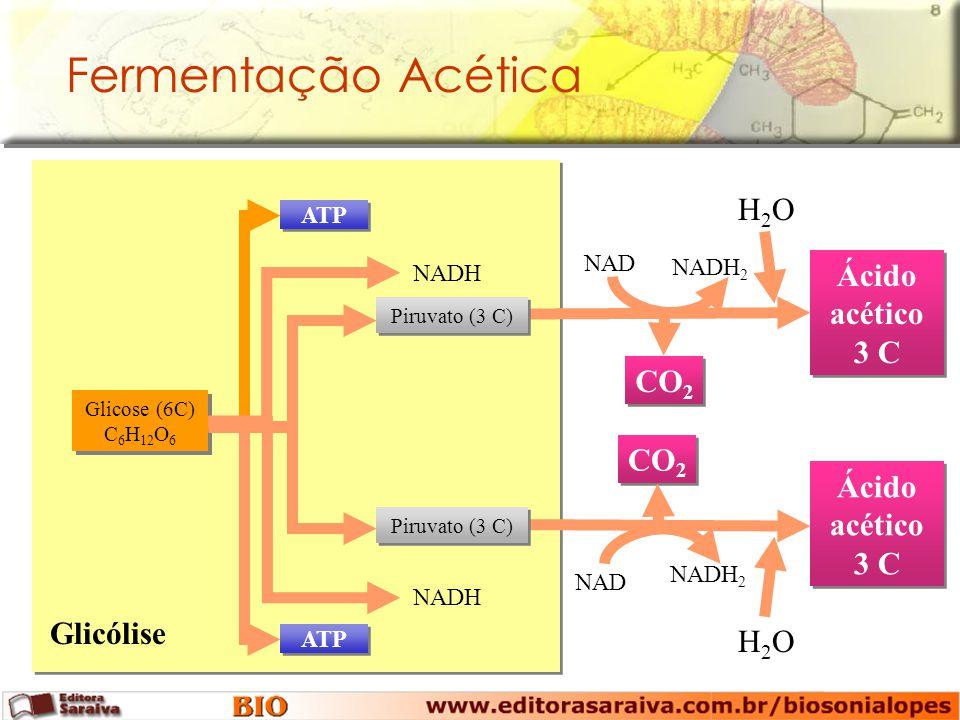 Fermentação Acética Glicólise Glicose (6C) C 6 H 12 O 6 ATP NADH Ácido acético 3 C CO 2 NAD NADH 2 H2OH2O Ácido acético 3 C CO 2 NAD NADH 2 H2OH2O Piruvato (3 C)