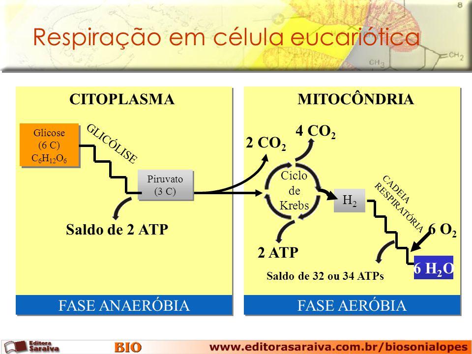 MITOCÔNDRIACITOPLASMA Glicose (6 C) C 6 H 12 O 6 Glicose (6 C) C 6 H 12 O 6 2 CO 2 Ciclo de Krebs 4 CO 2 2 ATP H2H2 FASE ANAERÓBIAFASE AERÓBIA 6 H 2 O CADEIA RESPIRATÓRIA Saldo de 32 ou 34 ATPs 6 O 2 Piruvato (3 C) GLICÓLISE Saldo de 2 ATP Respiração em célula eucariótica