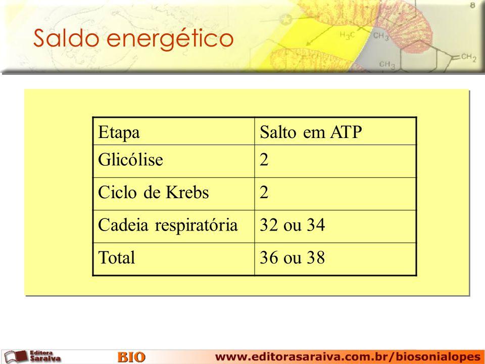 Saldo energético EtapaSalto em ATP Glicólise2 Ciclo de Krebs2 Cadeia respiratória32 ou 34 Total36 ou 38