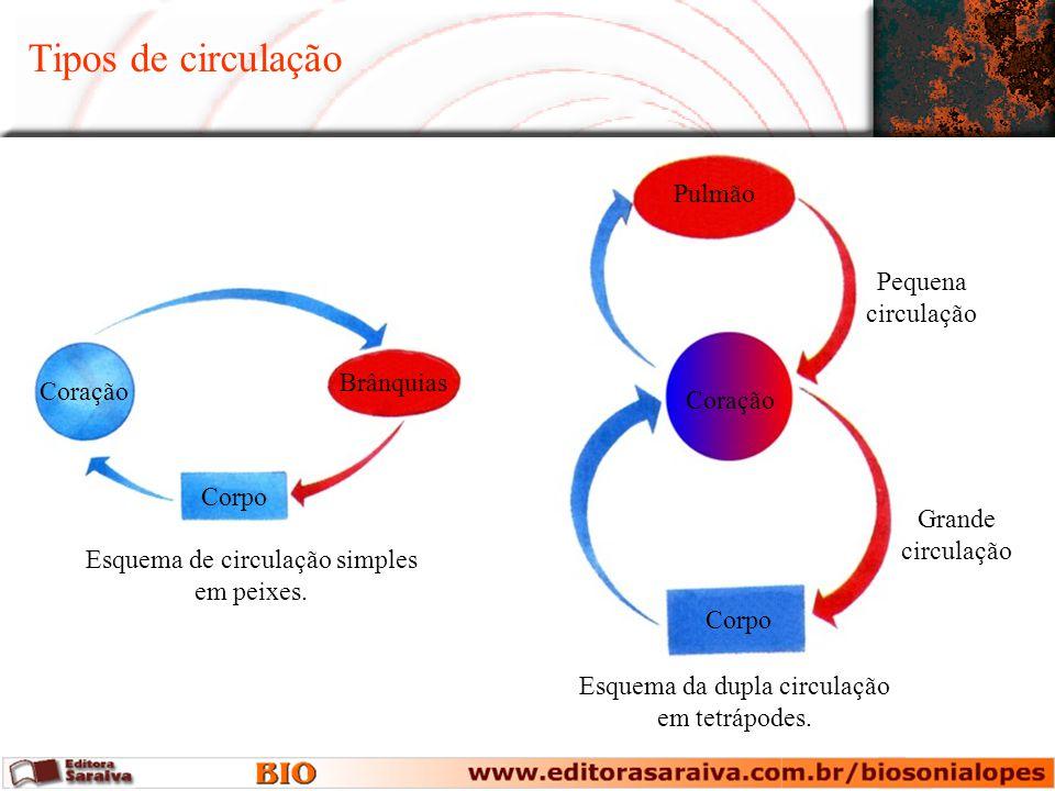 Coração Corpo Pulmão Esquema da dupla circulação em tetrápodes. Pequena circulação Grande circulação Tipos de circulação Coração Corpo Brânquias Esque