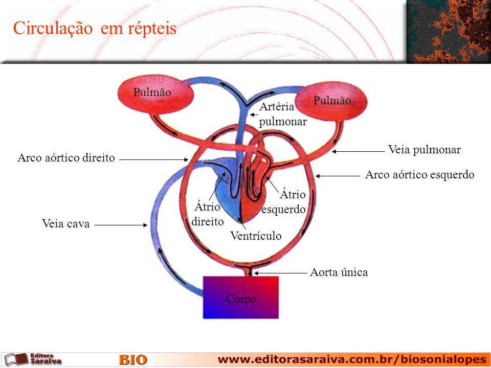 Circulação em répteis Pulmão Corpo Aorta única Veia cava Artéria pulmonar Veia pulmonar Arco aórtico direito Arco aórtico esquerdo Átrio esquerdo Vent