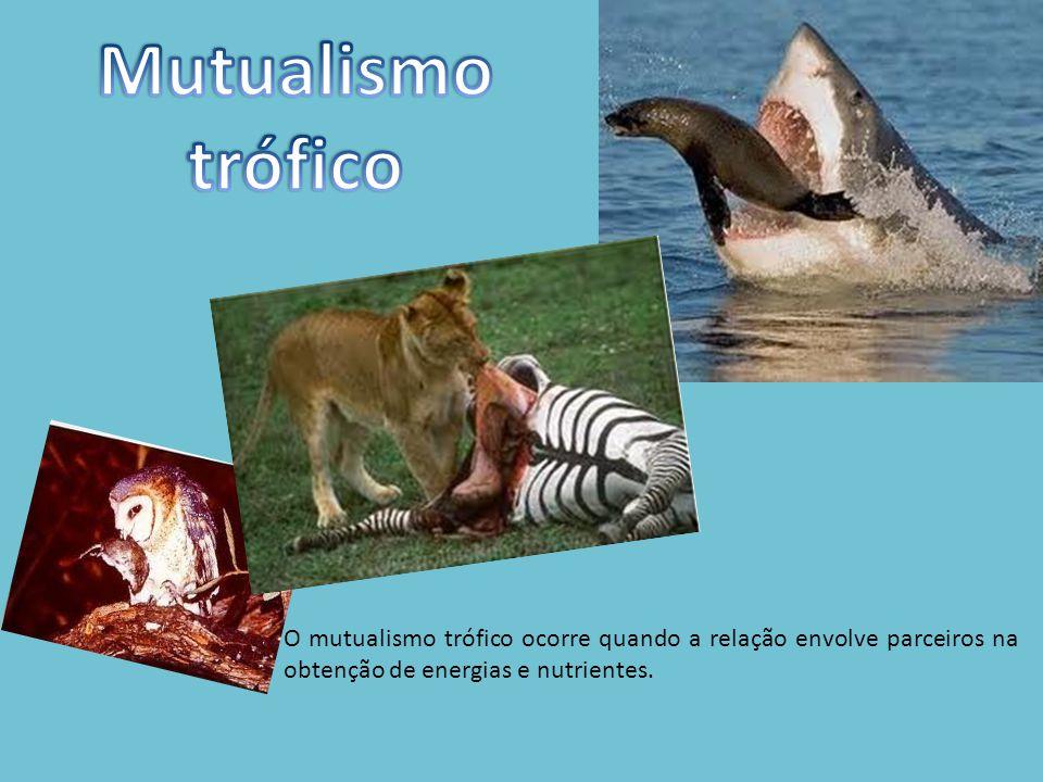 O mutualismo trófico ocorre quando a relação envolve parceiros na obtenção de energias e nutrientes.