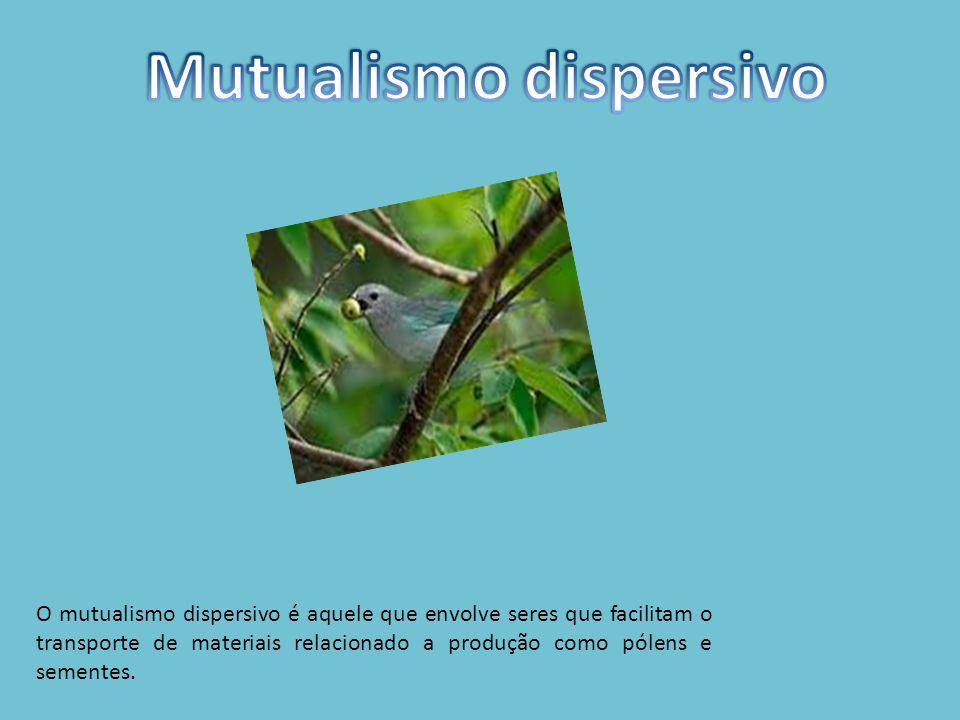 O mutualismo dispersivo é aquele que envolve seres que facilitam o transporte de materiais relacionado a produção como pólens e sementes.