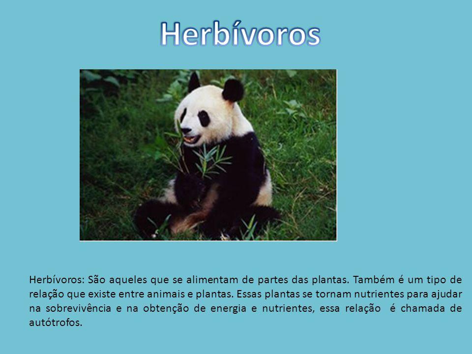 Herbívoros: São aqueles que se alimentam de partes das plantas.