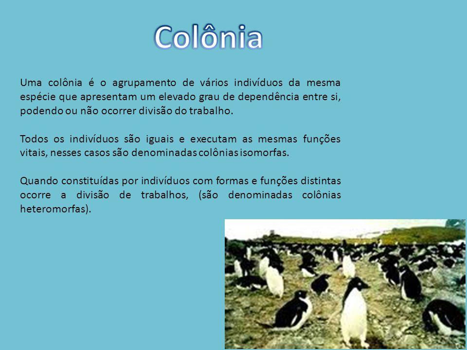 Uma colônia é o agrupamento de vários indivíduos da mesma espécie que apresentam um elevado grau de dependência entre si, podendo ou não ocorrer divisão do trabalho.
