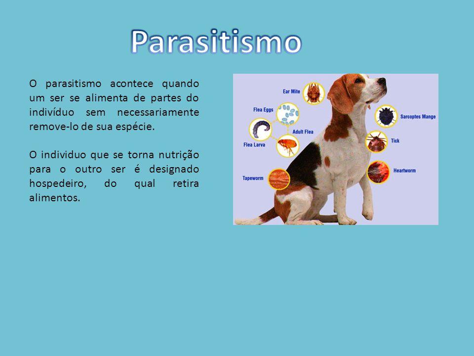 O parasitismo acontece quando um ser se alimenta de partes do indivíduo sem necessariamente remove-lo de sua espécie.