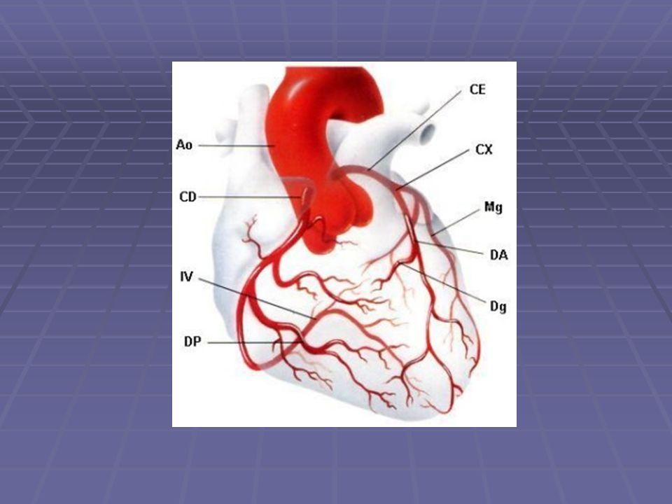 Ramos da Coronária Esquerda Tronco da coronária esquerda: Origina-se do seio aórtico esquerdo Cursa atrás da via de saída do VD e dá origem às artérias descendente anterior e circunflexa Eventualmente (20 a 37%), um ramo intermediário também origina se diretamente do tronco; Artéria descendente anterior: Origina os ramos diagonais (irrigam a parede livre anterolateral do VE) e ramos septais (que penetram no septo interventricular);
