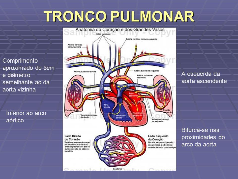 Relaciona-se posteriormente com a bifurcação da traquéia, anteriormente com a pleura mediastínica pulmão esquerdo e pleura mediastinal e medialmente com a aorta ascendente Relaciona-se posteriormente com a bifurcação da traquéia, anteriormente com a pleura mediastínica pulmão esquerdo e pleura mediastinal e medialmente com a aorta ascendente
