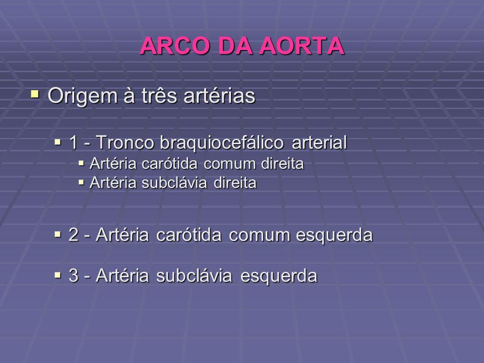 Origem à três artérias Origem à três artérias 1 - Tronco braquiocefálico arterial 1 - Tronco braquiocefálico arterial Artéria carótida comum direita A