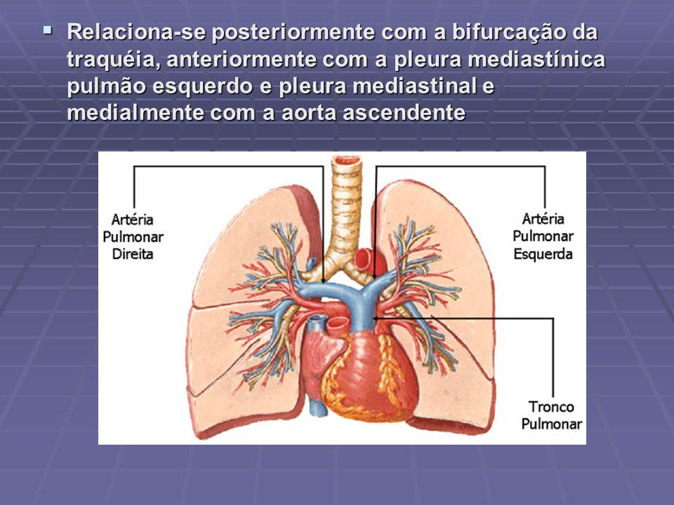 TRONCO PULMONAR Origina do ventrículo direito Origina do ventrículo direito Sob pressão relativamente alta (pressão sistólica de 20 a 30 mmHg) e de modo pulsátil Sob pressão relativamente alta (pressão sistólica de 20 a 30 mmHg) e de modo pulsátil Bifurca-se em duas artérias pulmonares Bifurca-se em duas artérias pulmonares Direita Direita Esquerda Esquerda Cada uma delas se ramifica a partir do hilo pulmonar em artérias segmentares pulmonares Cada uma delas se ramifica a partir do hilo pulmonar em artérias segmentares pulmonares Ao entrar nos pulmões, esses ramos se dividem e subdividem até formarem capilares, em torno alvéolos nos pulmões.