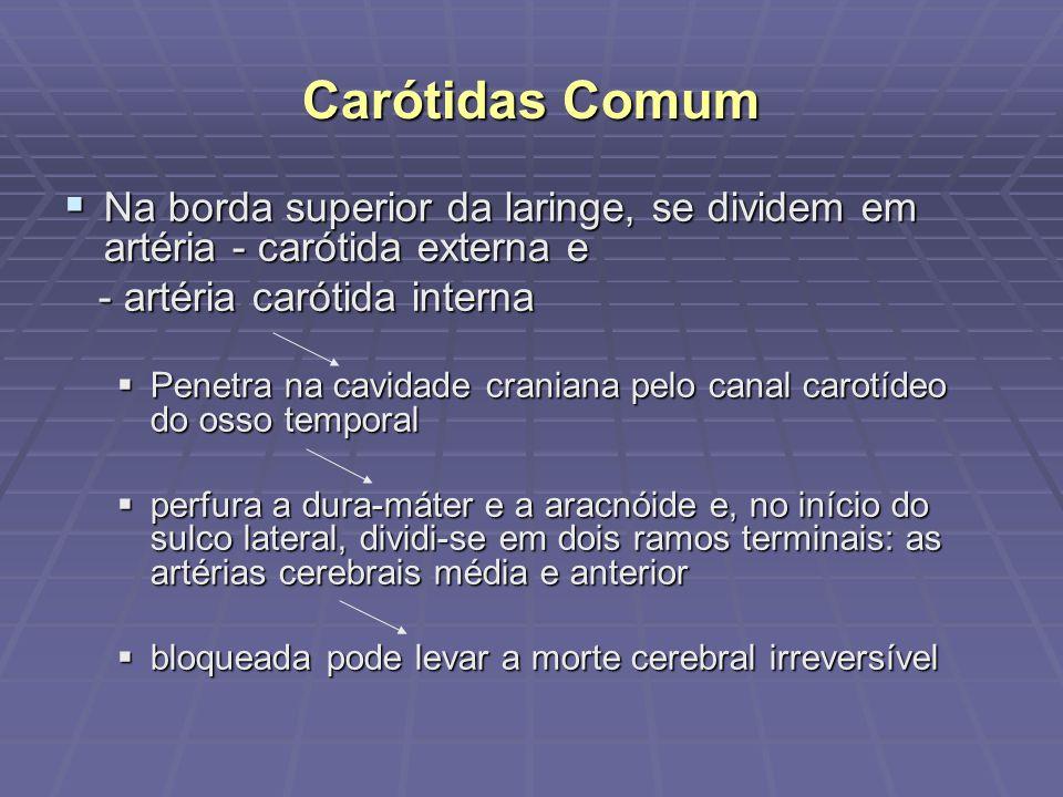 Carótidas Comum Na borda superior da laringe, se dividem em artéria - carótida externa e Na borda superior da laringe, se dividem em artéria - carótid