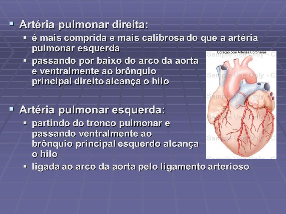 AORTA Diâmetro de 2 a 3 cm Quatro divisões Emerge do ventrículo esquerdo, posterior ao tronco pulmonar Artéria elástica, de túnica espessa e constituída, em grande parte, por lâminas de tecido elástico Paredes nutridas por vasa-vasorum