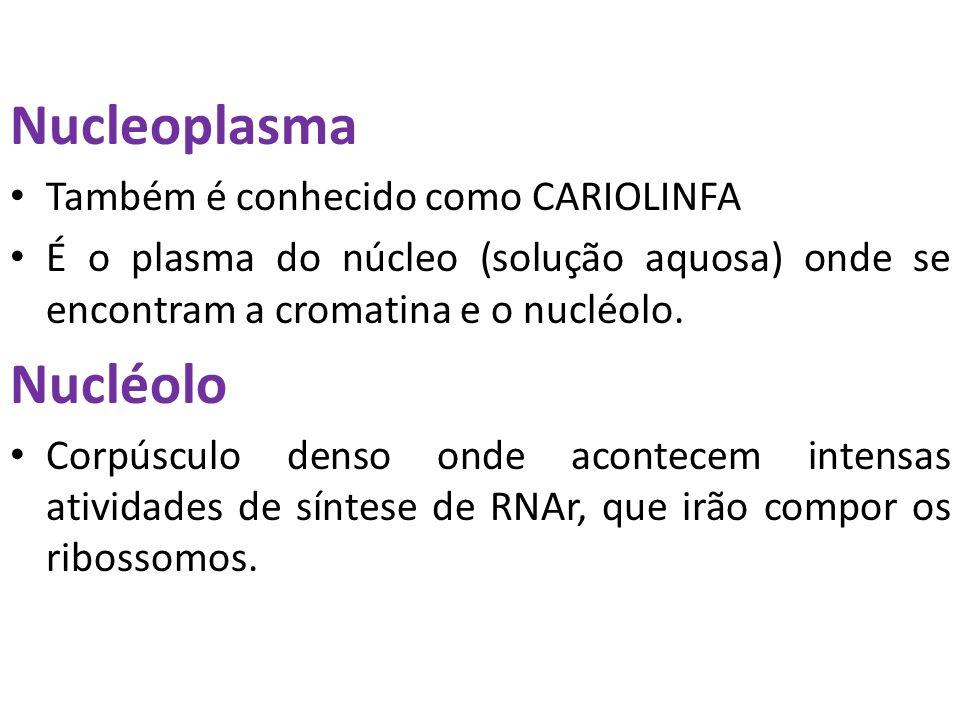 Nucleoplasma Também é conhecido como CARIOLINFA É o plasma do núcleo (solução aquosa) onde se encontram a cromatina e o nucléolo. Nucléolo Corpúsculo