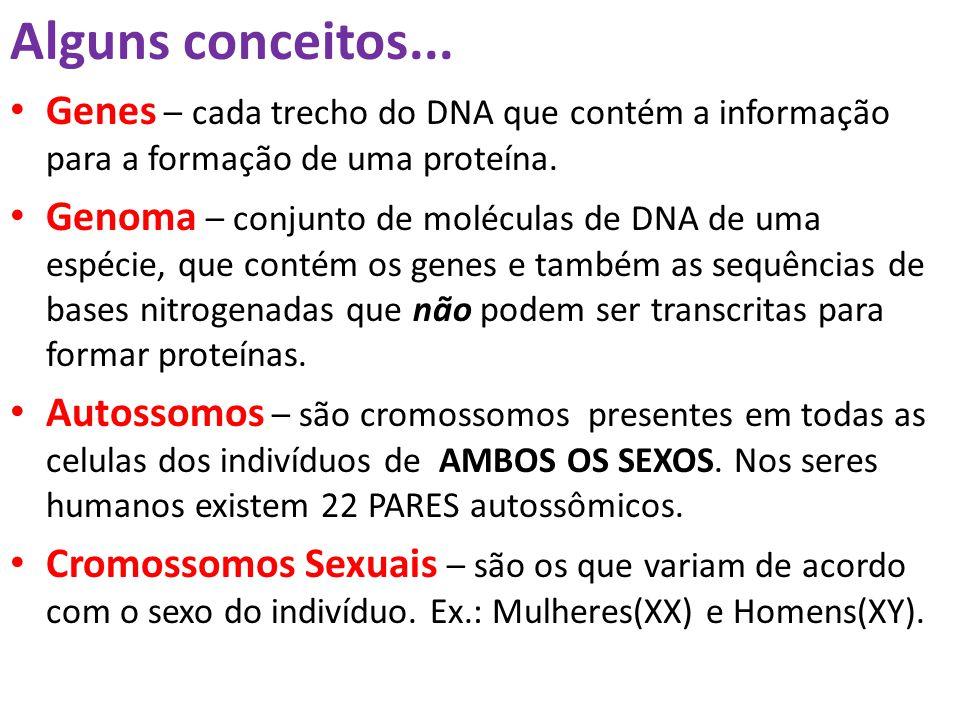 Alguns conceitos... Genes – cada trecho do DNA que contém a informação para a formação de uma proteína. Genoma – conjunto de moléculas de DNA de uma e