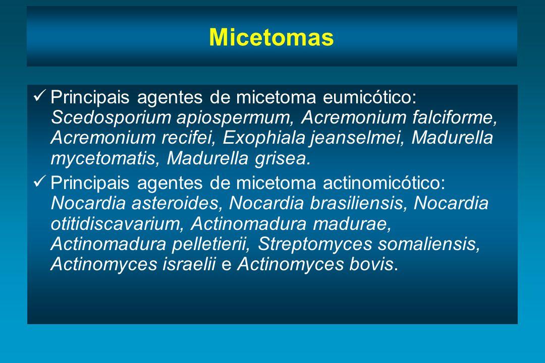 Micetomas Principais agentes de micetoma eumicótico: Scedosporium apiospermum, Acremonium falciforme, Acremonium recifei, Exophiala jeanselmei, Madure