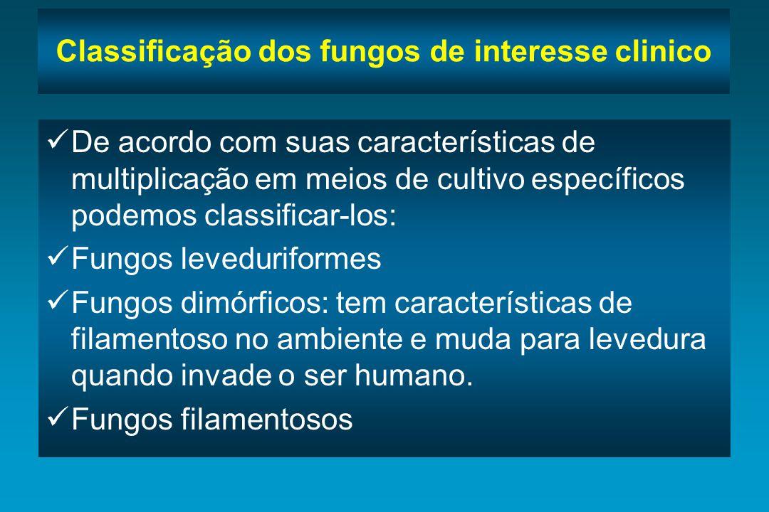 Classificação dos fungos de interesse clinico De acordo com suas características de multiplicação em meios de cultivo específicos podemos classificar-