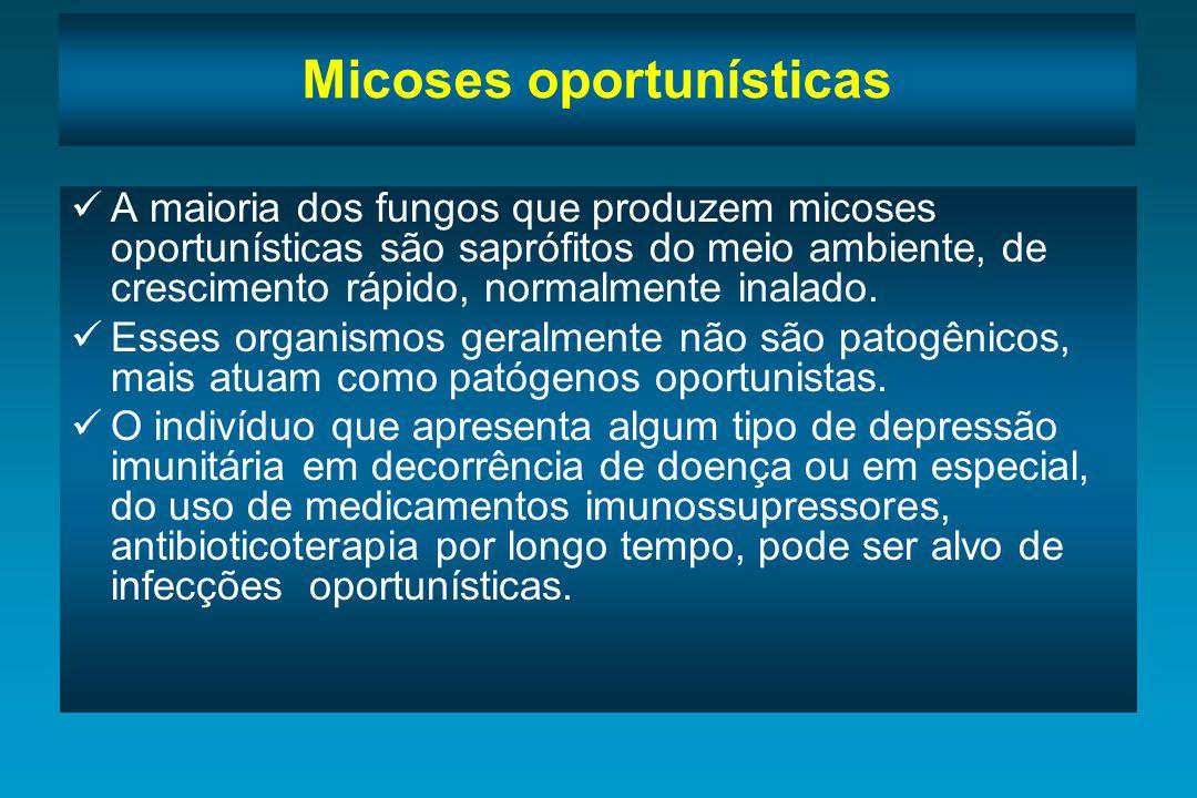Micoses oportunísticas A maioria dos fungos que produzem micoses oportunísticas são saprófitos do meio ambiente, de crescimento rápido, normalmente in
