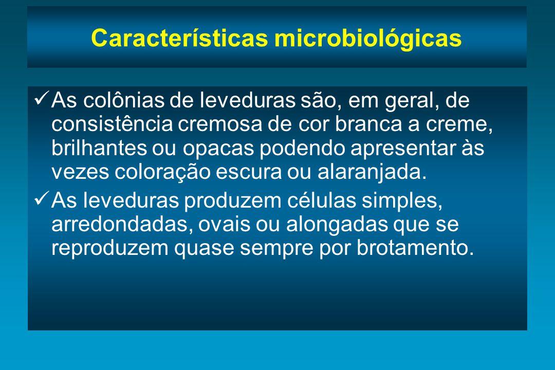 Características microbiológicas As colônias de fungos filamentosos podem ser granulares, cotonosas, aveludadas, pulverulentas, membranosas.