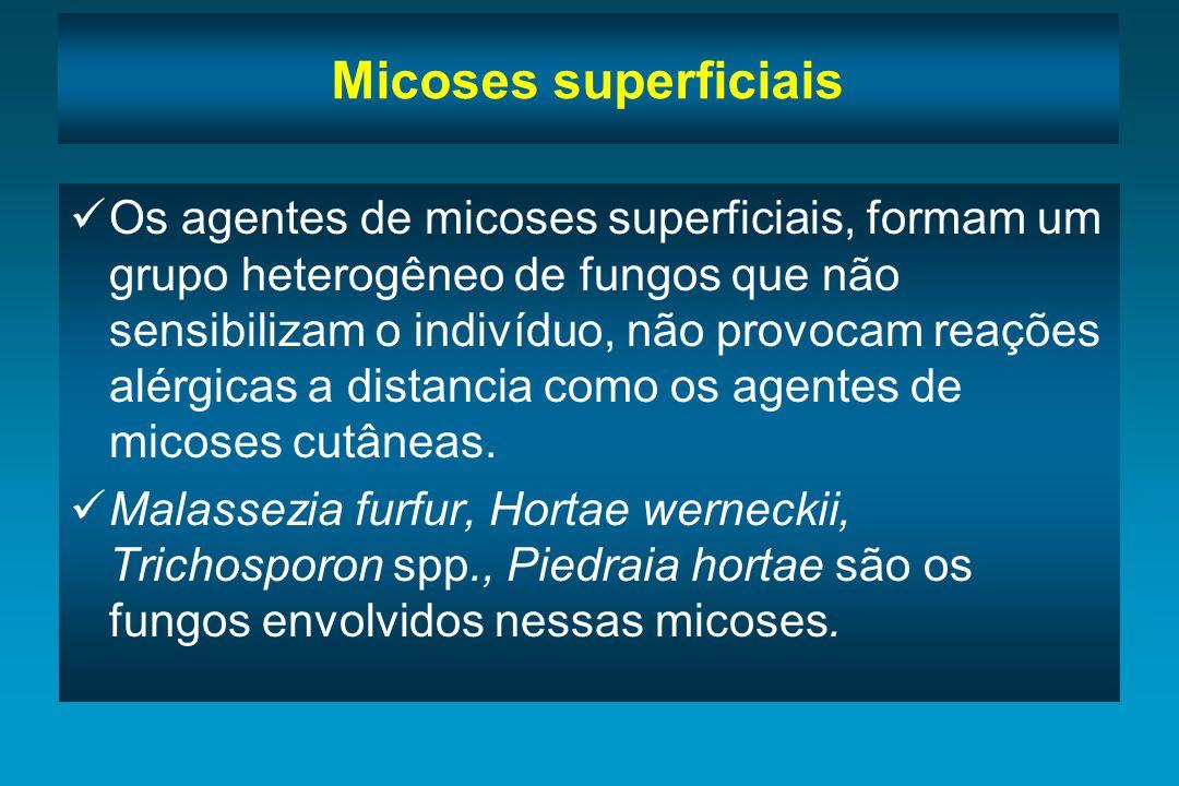 Micoses superficiais Malassezia furfur - Agente da pitiríase versicolor, afecção cutânea assintomática que se caracteriza por placas descamativas de diferentes cores: castanho-avermelhadas, marrons ou brancas.