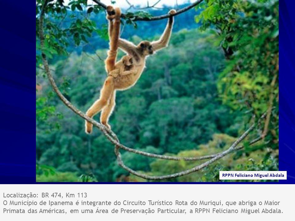 Localização: BR 474, Km 113 O Município de Ipanema é integrante do Circuito Turístico Rota do Muriqui, que abriga o Maior Primata das Américas, em uma