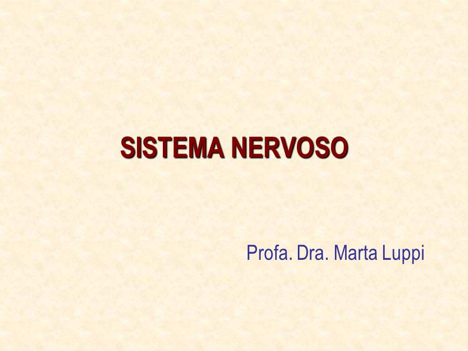 Sistema Nervoso Aferente Visceral Ao contrário das fibras de receptores somáticos – grande parte das fibras viscerais conduz impulsos que não se tornam consciente.