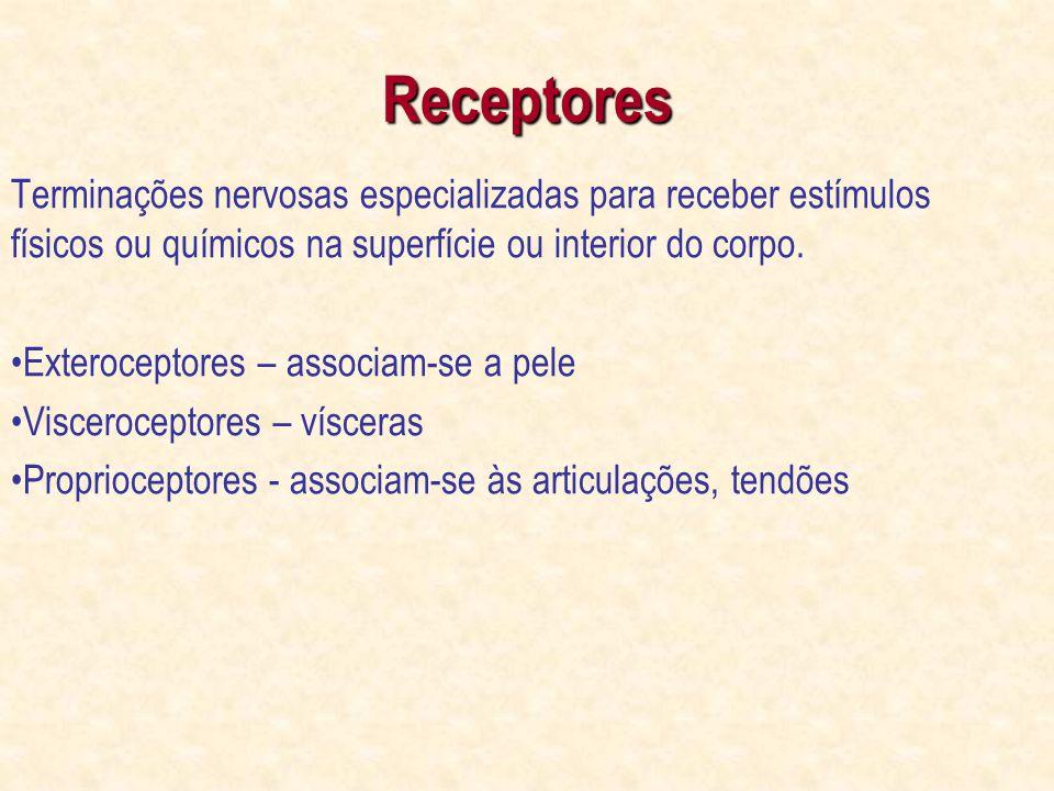 Receptores Terminações nervosas especializadas para receber estímulos físicos ou químicos na superfície ou interior do corpo.