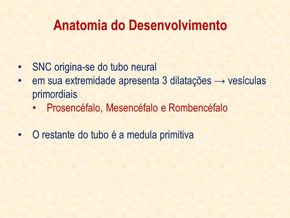 SNC origina-se do tubo neural em sua extremidade apresenta 3 dilatações vesículas primordiais Prosencéfalo, Mesencéfalo e Rombencéfalo O restante do tubo é a medula primitiva Anatomia do Desenvolvimento