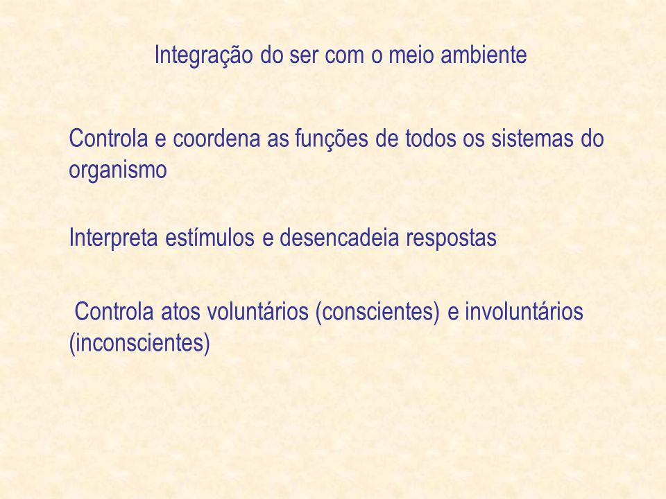 Controla e coordena as funções de todos os sistemas do organismo Interpreta estímulos e desencadeia respostas Controla atos voluntários (conscientes) e involuntários (inconscientes) Integração do ser com o meio ambiente