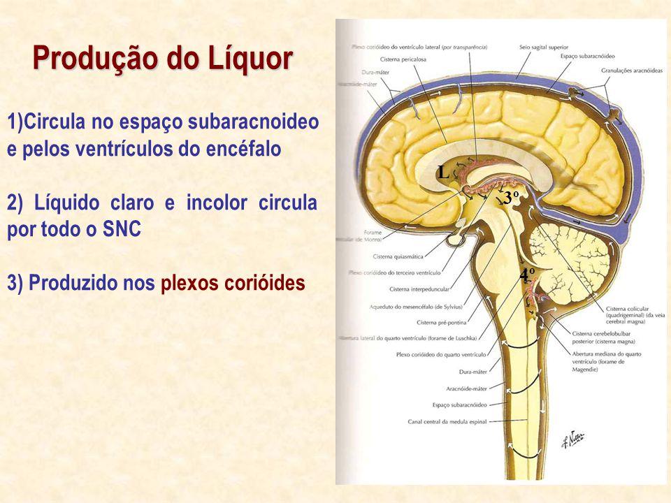 Produção do Líquor 1)Circula no espaço subaracnoideo e pelos ventrículos do encéfalo 2) Líquido claro e incolor circula por todo o SNC 3) Produzido nos plexos corióides 3º 4º L