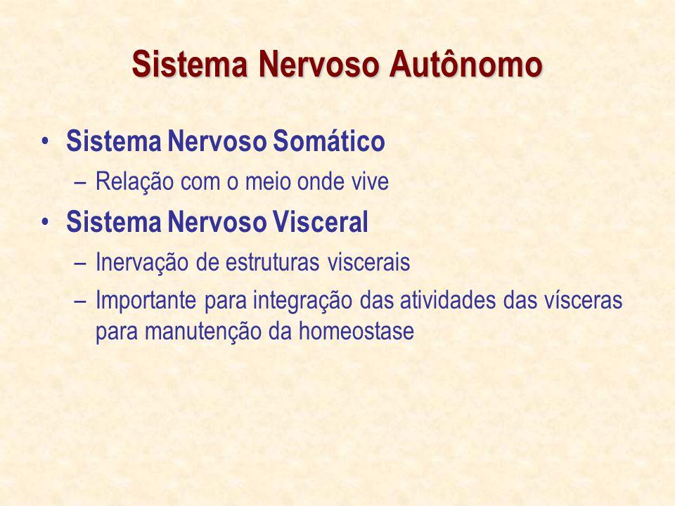 Sistema Nervoso Autônomo Sistema Nervoso Somático –Relação com o meio onde vive Sistema Nervoso Visceral –Inervação de estruturas viscerais –Importante para integração das atividades das vísceras para manutenção da homeostase