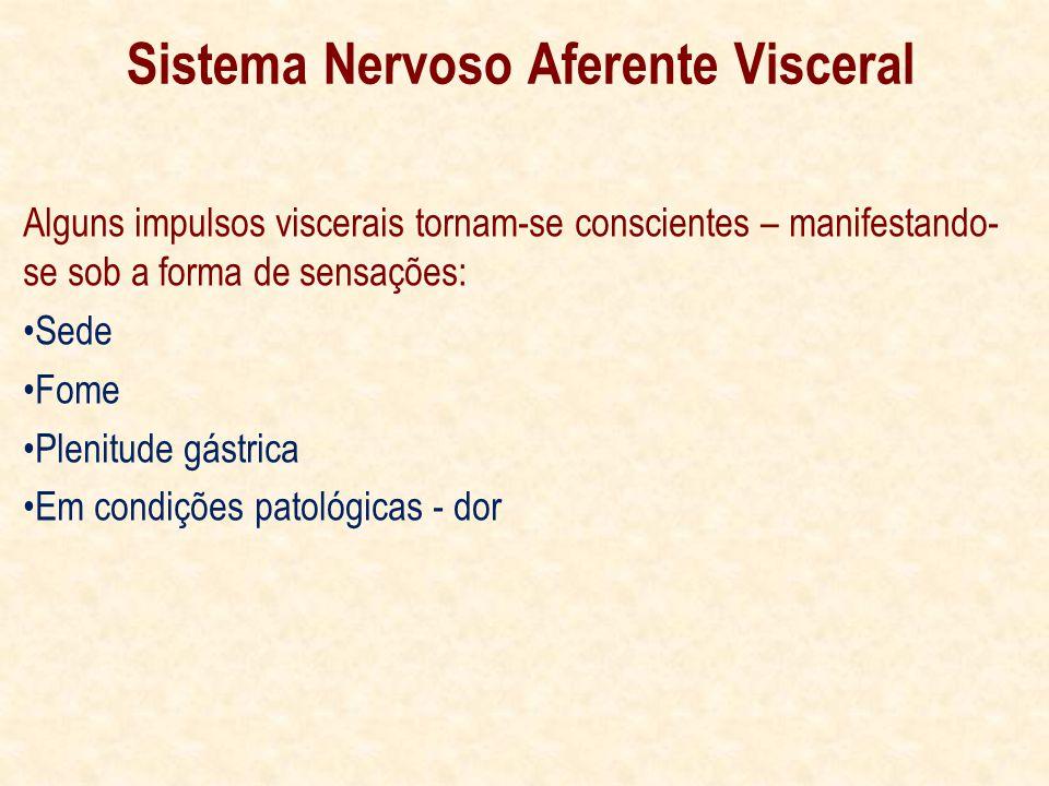 Alguns impulsos viscerais tornam-se conscientes – manifestando- se sob a forma de sensações: Sede Fome Plenitude gástrica Em condições patológicas - dor Sistema Nervoso Aferente Visceral