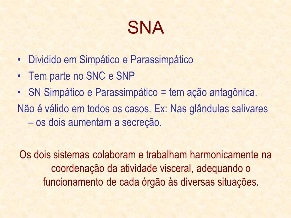 SNA Dividido em Simpático e Parassimpático Tem parte no SNC e SNP SN Simpático e Parassimpático = tem ação antagônica.