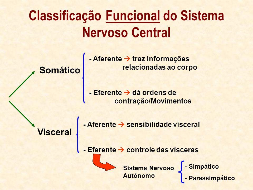 Classificação Funcional do Sistema Nervoso Central Somático Visceral - Aferente traz informações relacionadas ao corpo - Eferente dá ordens de contração/Movimentos - Aferente sensibilidade visceral - Eferente controle das vísceras Sistema Nervoso Autônomo - Simpático - Parassimpático