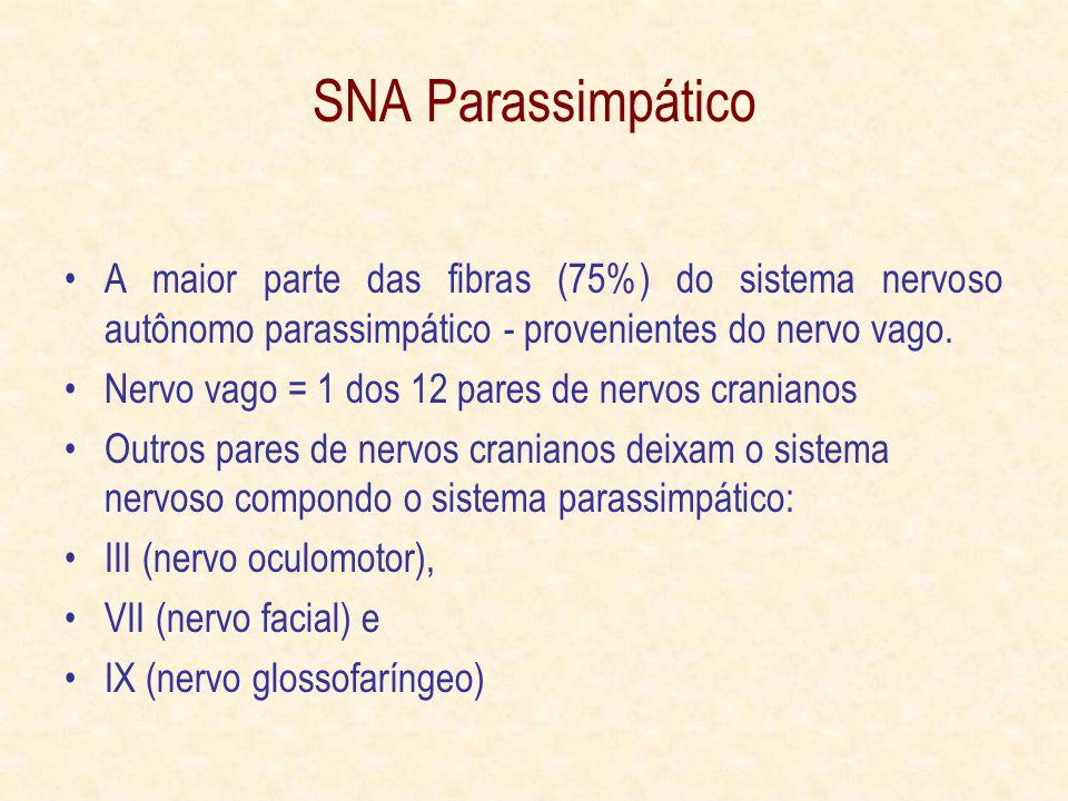 SNA Parassimpático A maior parte das fibras (75%) do sistema nervoso autônomo parassimpático - provenientes do nervo vago.
