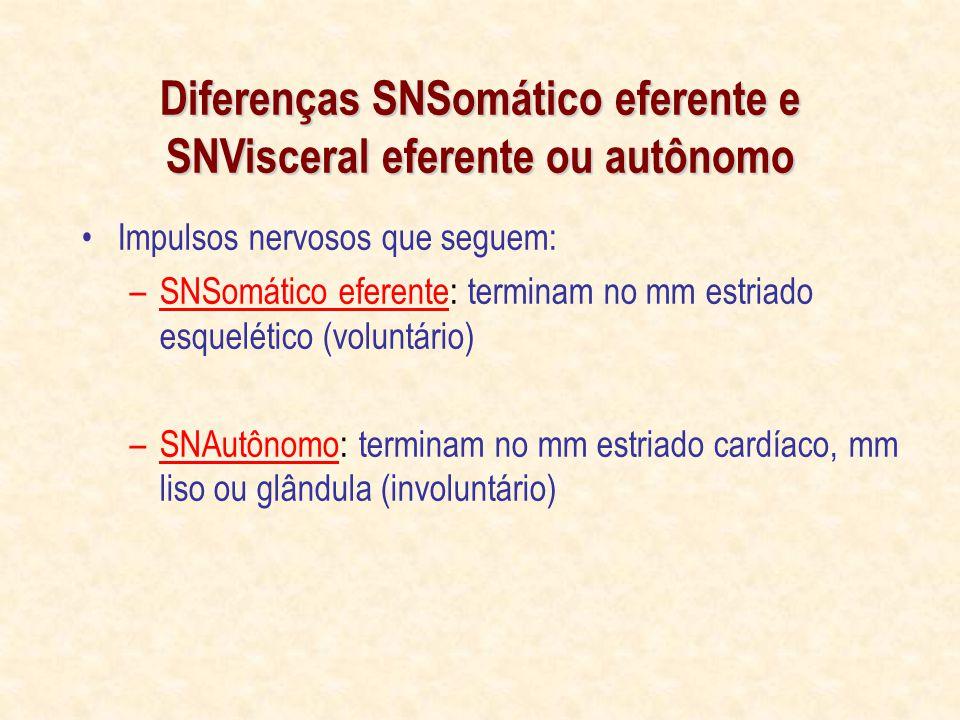 Diferenças SNSomático eferente e SNVisceral eferente ou autônomo Impulsos nervosos que seguem: –SNSomático eferente: terminam no mm estriado esquelético (voluntário) –SNAutônomo: terminam no mm estriado cardíaco, mm liso ou glândula (involuntário)