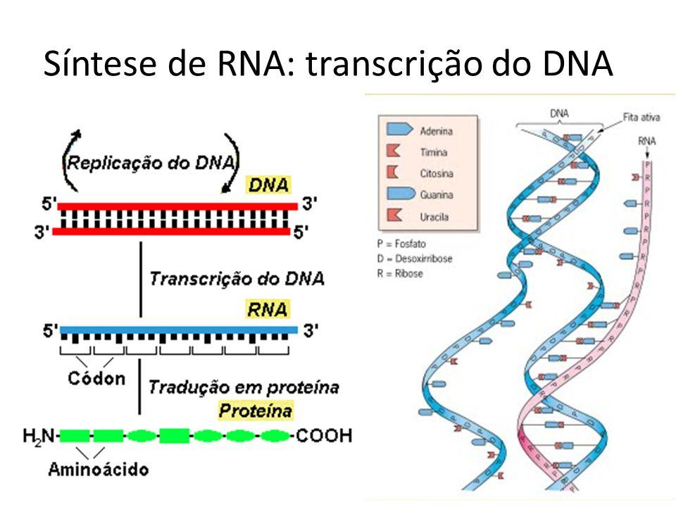 Síntese de RNA: transcrição do DNA