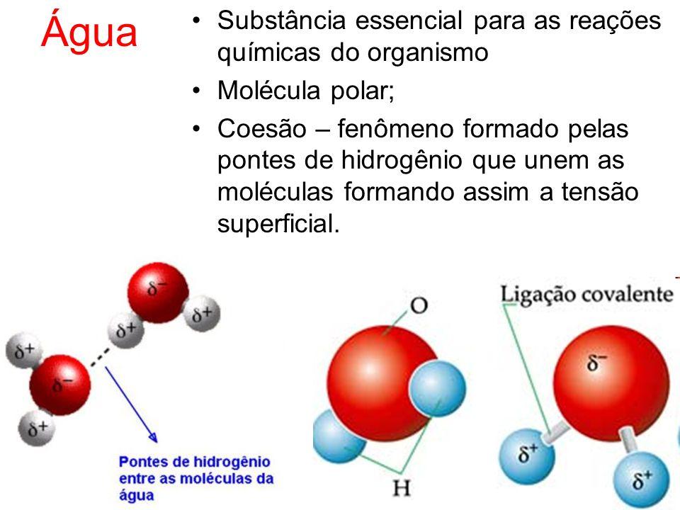 Água Substância essencial para as reações químicas do organismo Molécula polar; Coesão – fenômeno formado pelas pontes de hidrogênio que unem as moléc