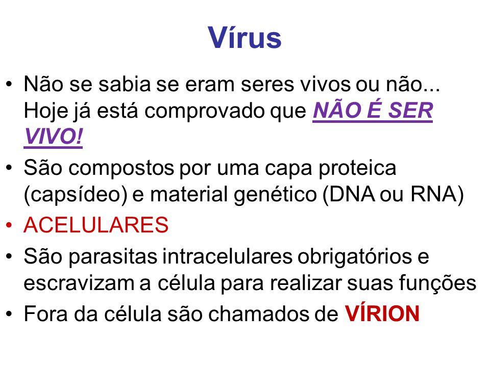 Vírus Não se sabia se eram seres vivos ou não... Hoje já está comprovado que NÃO É SER VIVO! São compostos por uma capa proteica (capsídeo) e material