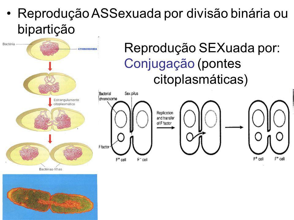 Reprodução ASSexuada por divisão binária ou bipartição Reprodução SEXuada por: Conjugação (pontes citoplasmáticas)