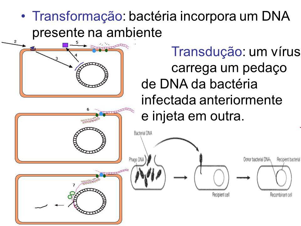 Transformação: bactéria incorpora um DNA presente na ambiente Transdução: um vírus carrega um pedaço de DNA da bactéria infectada anteriormente e inje