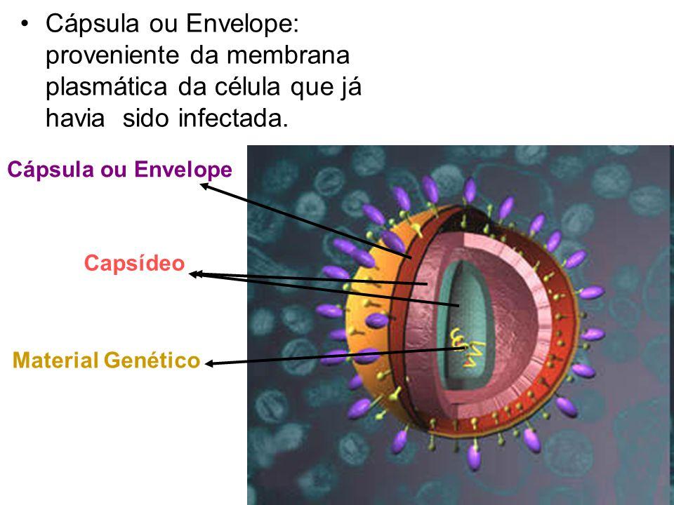 Cápsula ou Envelope: proveniente da membrana plasmática da célula que já havia sido infectada. Cápsula ou Envelope Capsídeo Material Genético
