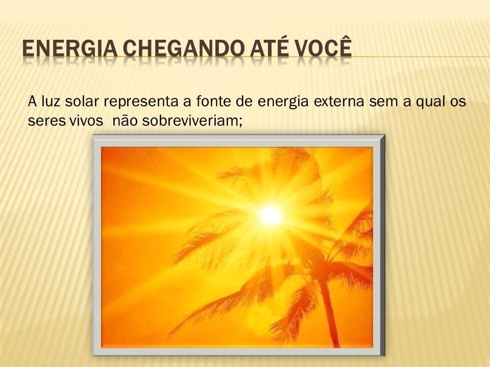 A luz solar representa a fonte de energia externa sem a qual os seres vivos não sobreviveriam;