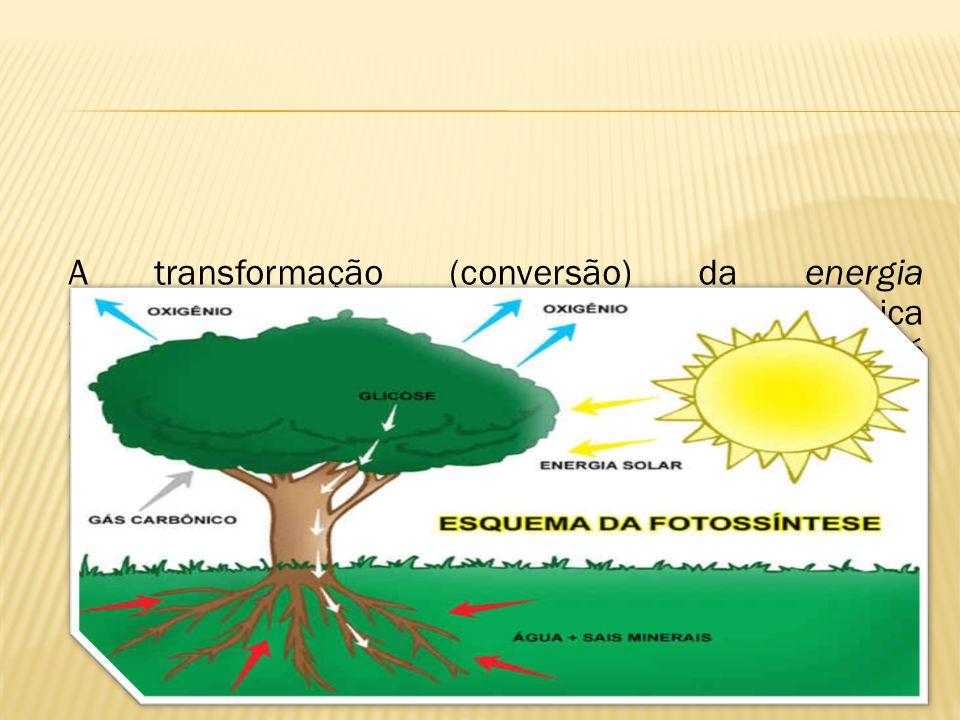 A transformação (conversão) da energia luminosa para energia química, que é a única modalidade de energia utilizável pelas células. Isso é possivel gr