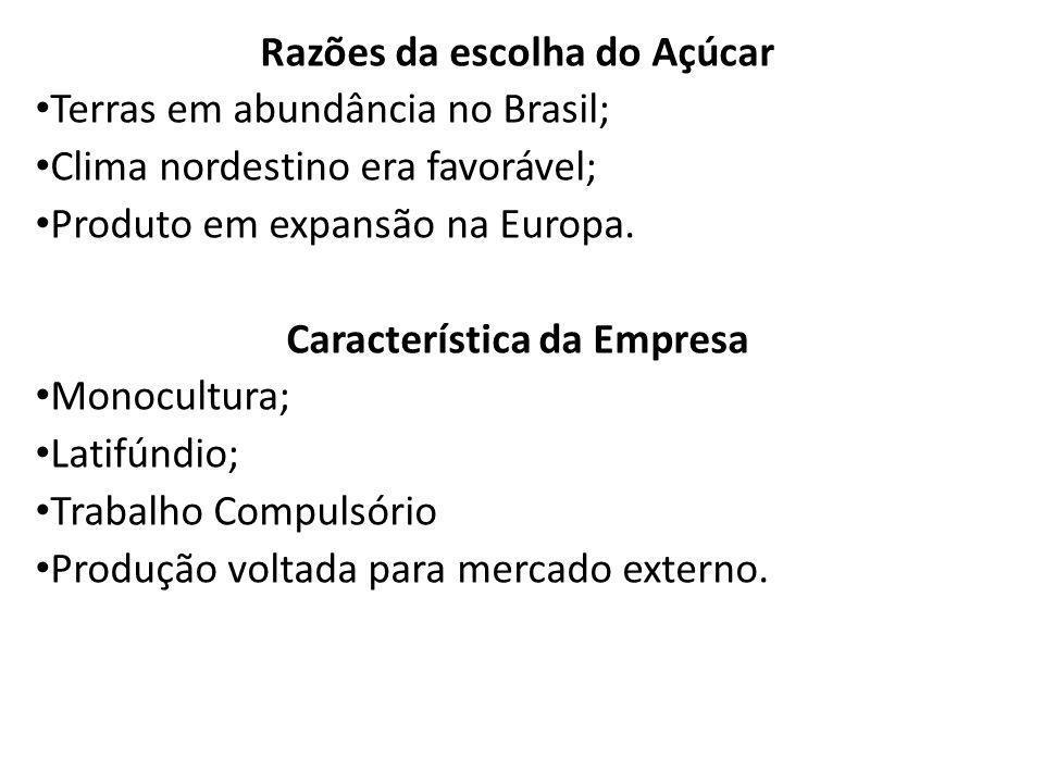 Razões da escolha do Açúcar Terras em abundância no Brasil; Clima nordestino era favorável; Produto em expansão na Europa. Característica da Empresa M